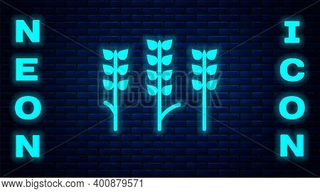 Glowing Neon Cereals Set With Rice, Wheat, Corn, Oats, Rye, Barley Icon Isolated On Brick Wall Backg