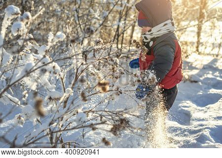 Child Is Playing With Snow On A Winter Frosty Sunny Day Among The Trees Outdoors At Sunset