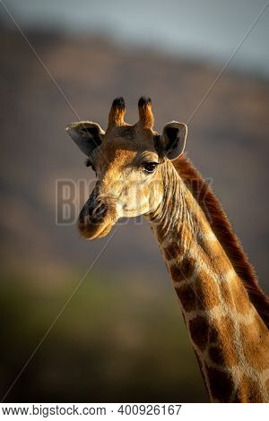 Close-up Of Southern Giraffe Head With Catchlight