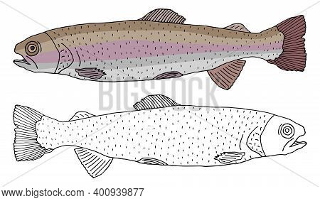 Rainbow Trout Fish Icon Isolated, Hand Drawing. Set Of Beautiful Fish In Color And White With Black.