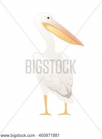 Pelican Genus Large Water Bird Cartoon Animal Design Big White Bird With Orange Beak Flat Vector Ill