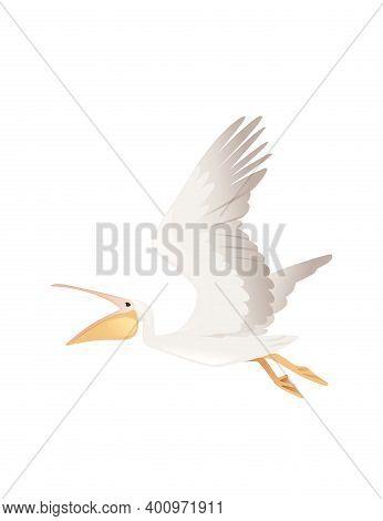 Pelican Genus Large Water Bird Cartoon Animal Design Big White Bird Flying With Orange Open Beak Fla