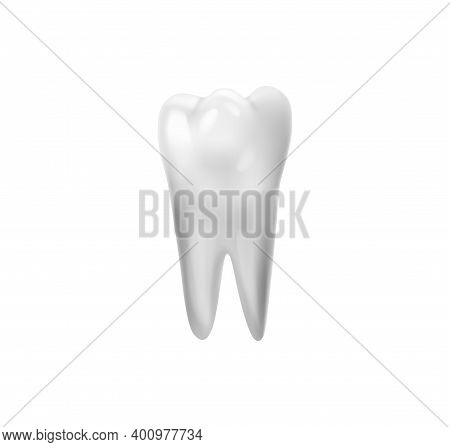Realistic Tooth Anatomy Composition With White Tooth Classic Image Isolated On Blank Background Vect