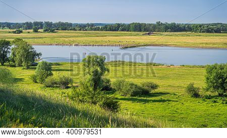 Summer Rural Landscape With Grazing Herd Of Cattle On Agriculture Fields, Forest And Oder River, Cou