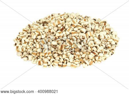 White Job's Tears, Adlay Millet Or Pearl Millet Isolated On White Background. Raw Food For Health Co
