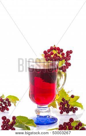 Tea Viburnum In A Cup