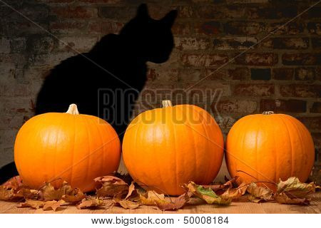 Halloween pumpkins against a brick wall with the shadow of a black witches cat