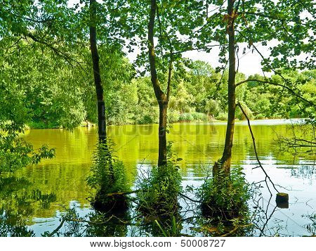 Three trees in the water