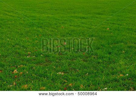 Beautiful green grass for background