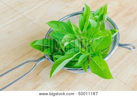 Fresh Basil In Sieve