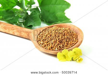 Mustard seeds in wooden spoon with mustard flower isolated on white