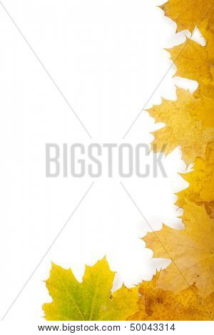 Autumn yellow leaves closeup frame
