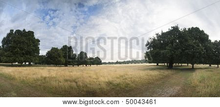 Landscape Panorama Of Summer Park