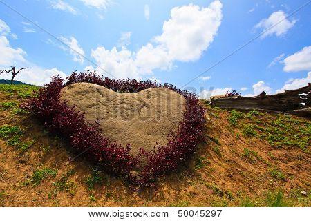 Purple Heart In The Garden