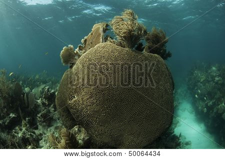 Large Coral Structure