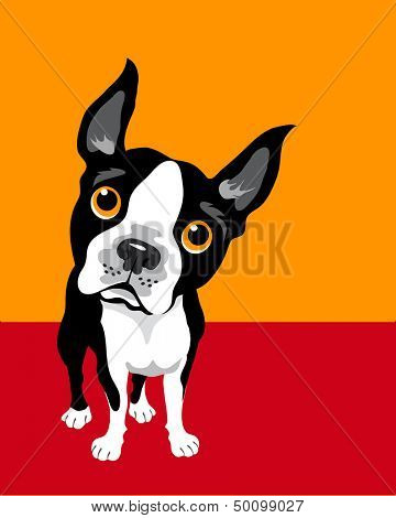Illustration of a Boston Terrier Dog