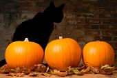 Halloween pumpkins against a brick wall with the shadow of a black witches cat poster