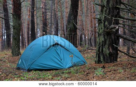 tourist's tent in old pine forest
