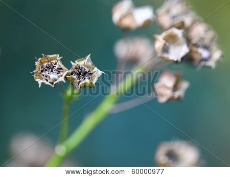 Dried small plant
