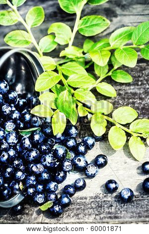 Fresh Blueberry With Green Leaves In A Metal Bucket On Wooden Background Close Up. Bowl Of Blueberri
