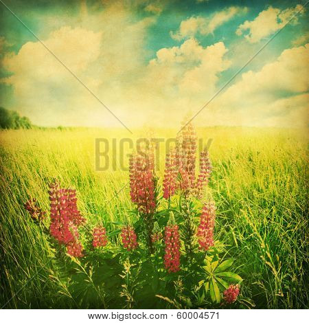 Summer field with lupine flowers and in grunge and retro style.