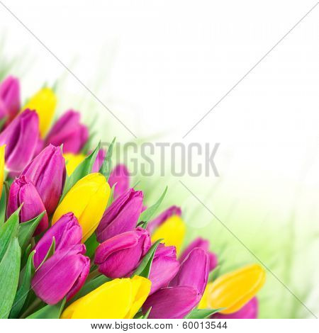Beautiful bouquet of colorful tulips flowers.