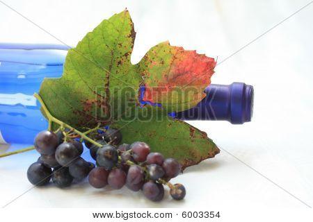 Autumn Colored Grape Leaves
