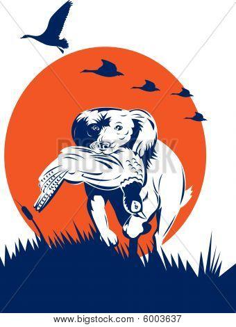 poster of vector illustration of a Cocker spaniel gun dog retrieving pheasant