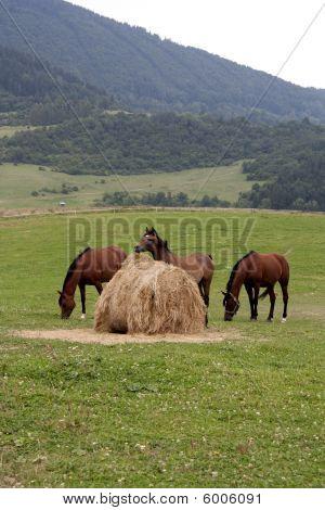 Drei Pferde und Strohballen