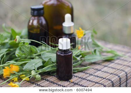 Medical calendula