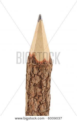 Branch Pencil