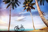 Bicycle with basket on the beach near palm trees and ocean in India poster