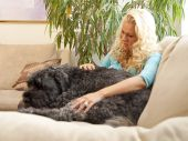 Picture of a young woman sitting with her pet dog - a Bouvier des Flandres on a couch poster