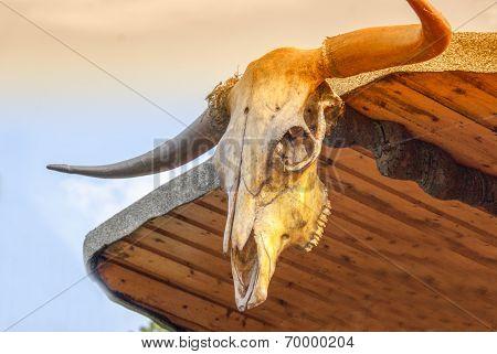 Skull of Vaginitis