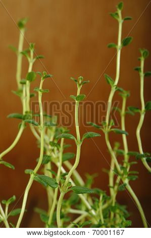 Fresh Thyme On Wooden Background