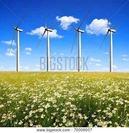 field of daisies with wind turbines