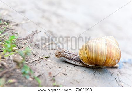 Snail crawling on the path