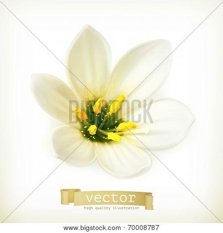 White flower, vector illustration