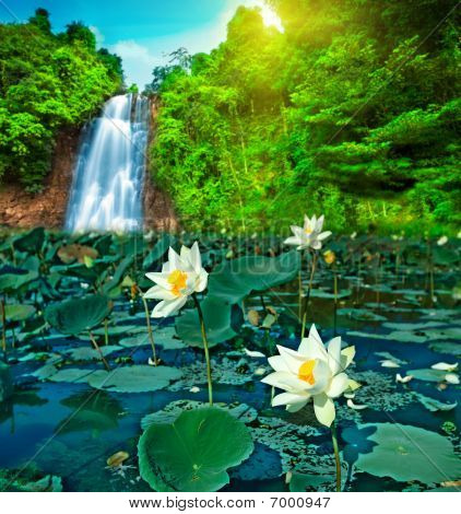 Lotus And Waterfall