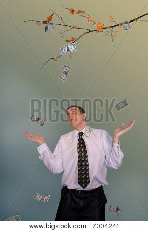 Collapse Price