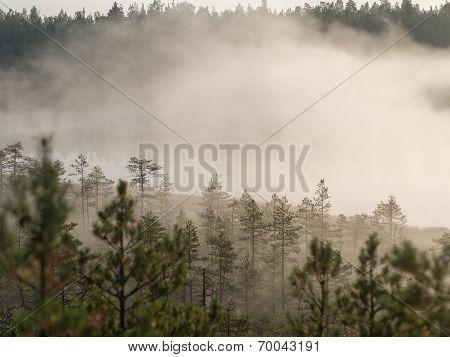 Morning Mist Over The Marsh