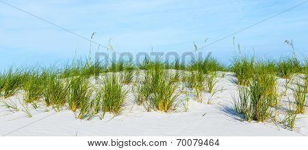 Grass Grows At Dune At A Beautiful Beach