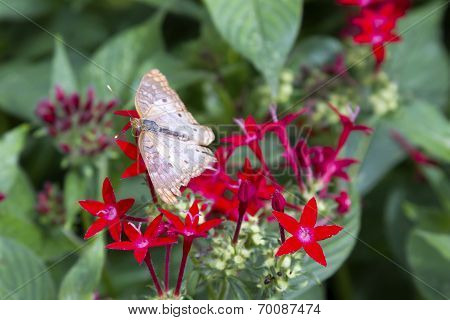 Butterfly On Vibrant Red Flower