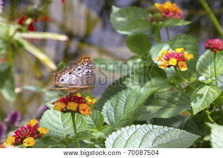 Butterfly, On Flower, Side View