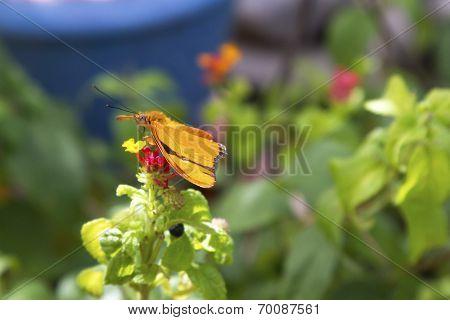 Butterfly, Orange, Side View