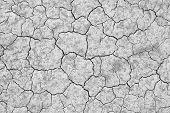 dry cracked soil texture and background on dry season (grayscale) poster