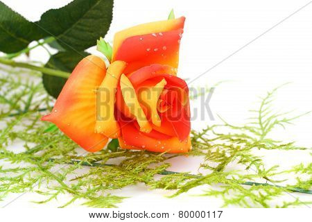 Red With Orange Rose
