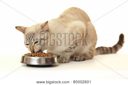 Cat eat dry food.
