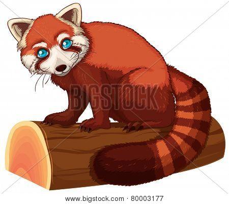 Illustration of a single red panda