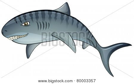 Illustration of a close up tiger shark